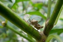зеленый завод насекомого стоковая фотография rf