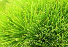 Зеленый завод с предпосылками Стоковое фото RF