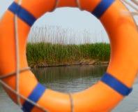 Зеленый завод тросточки появляется через lifebuoy в реке стоковая фотография rf