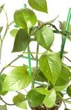 зеленый завод Стоковое Фото
