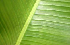 зеленый завод Стоковое Изображение RF