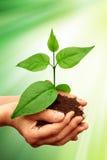 зеленый завод Стоковые Фотографии RF