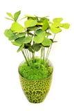 зеленый завод Стоковые Изображения RF