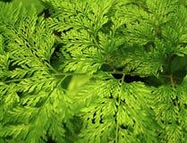 зеленый завод Стоковое Изображение