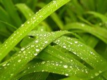 зеленый завод Стоковое фото RF