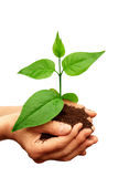 зеленый завод руки Стоковые Фото