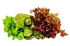 зеленый запятнанный красный цвет салата Стоковое Изображение