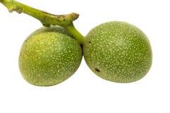 Зеленый зреть плодоовощей yaoung грецкого ореха на дереве с листьями, Стоковая Фотография RF