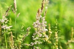 зеленый июнь Стоковые Фото