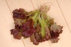 Зеленый и фиолетовый салат, салат; зеленый салат ang красный, свежая соль Стоковые Изображения RF