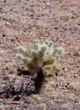 Зеленый кактус в пустыне Аризоны стоковое фото