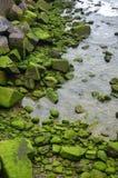 зеленый камень Стоковые Фотографии RF