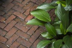 Зеленый кирпич лист и пола Стоковая Фотография