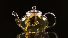 Зеленый китайский бутон цветка чая зацветая в стеклянном чайнике сток-видео
