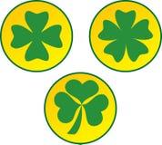 Зеленый клевер Стоковое Фото
