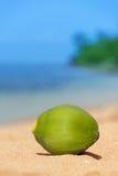 Зеленый кокос упал на пляж Стоковые Фотографии RF