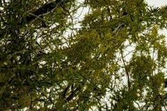 Зеленый конец детали вербы вверх стоковое фото rf