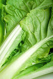 Зеленый конец овоща вверх Стоковое фото RF