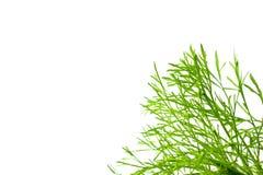 Зеленый космос лист и экземпляра Стоковые Изображения RF