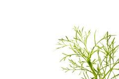 Зеленый космос лист и экземпляра Стоковое Изображение RF