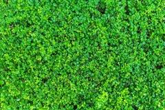 Зеленый космос предпосылки природы конспекта Буша Стоковые Изображения