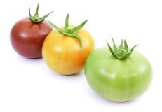 зеленый красный желтый цвет томатов Стоковая Фотография