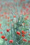 зеленый красный цвет Стоковое Изображение RF