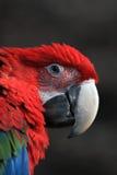 зеленый красный цвет macaw стоковые фотографии rf