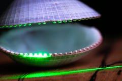 Зеленый лазер освещает открытую раковину clam стоковые изображения rf