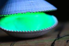 Зеленый лазер освещает открытую раковину clam стоковая фотография