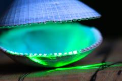 Зеленый лазер освещает открытую раковину clam стоковая фотография rf