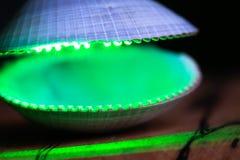 Зеленый лазер освещает открытую раковину clam стоковое изображение