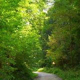 Зеленый ландшафт в дороге леса к Poiana Brasov Стоковые Изображения RF