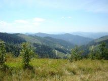 Зеленый ландшафт горы Карпатов против голубого неба Стоковое Изображение RF