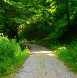 зеленый ландшафт Дорога к Poiana Brasov Стоковые Изображения