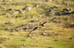 зеленый ландшафт летая змея Стоковая Фотография