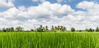 Зеленый ландшафт природы стоковое изображение