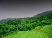 Зеленый ландшафт сельской местности Стоковые Изображения
