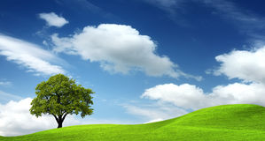 зеленый ландшафт Стоковые Изображения