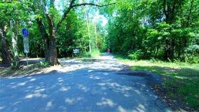 Зеленый лес, деревья в лесе, ландшафте лета сток-видео
