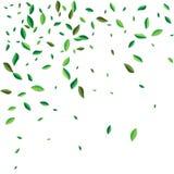 Зеленый летать или падать выходят Предпосылка листвы вектора абстрактная иллюстрация штока