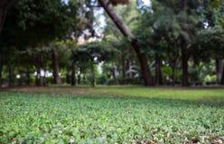 Зеленый луг в парке, предпосылка bokeh, обои Стоковая Фотография RF