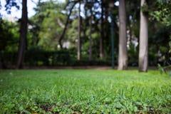 Зеленый луг в парке, предпосылка bokeh, обои Стоковые Изображения RF