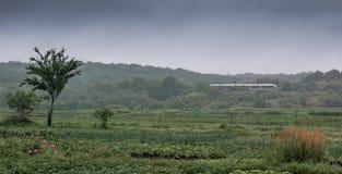 Зеленый луг в предпосылке леса и хмурого неба, в dista Стоковое фото RF