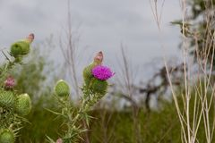 Зеленый луг с thistles весны весной Стоковое фото RF