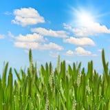 Зеленый лужок в солнечном дне лета Стоковые Изображения RF