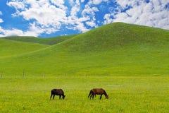 зеленый лужок лошадей Стоковые Изображения RF