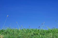 зеленый лужок Стоковые Фото