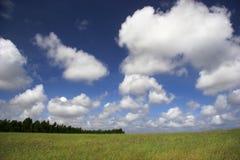зеленый лужок Стоковое Фото