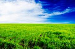 зеленый лужок стоковые изображения